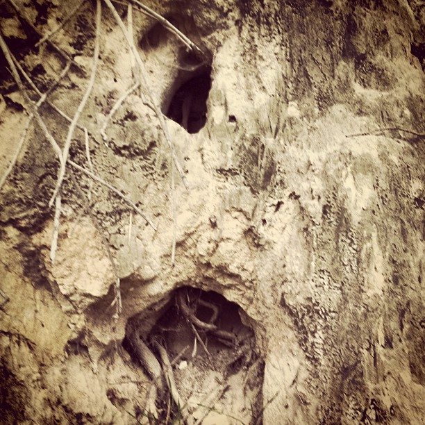 root hole