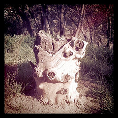 Frog Stump - Elysian Park
